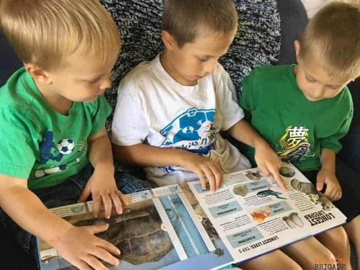 Your young readers will not want to put down their Scanorama books! Full of engaging images & features, these books rock!