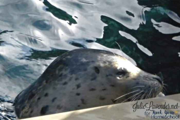 Enjoy International Seal Day this March with Kids.