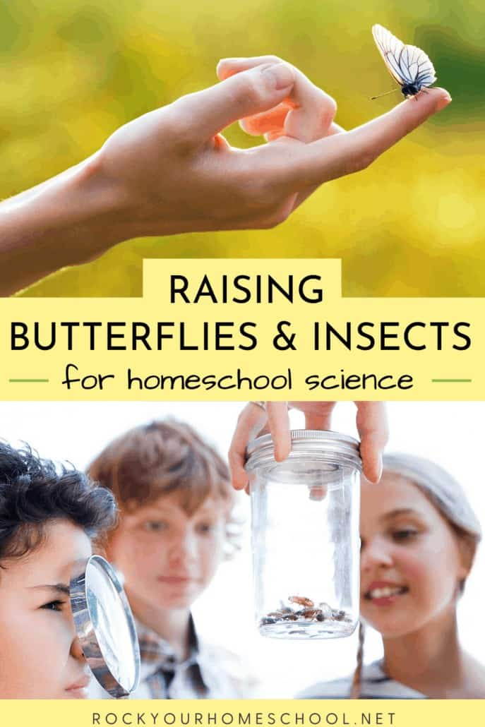 10 Top Tips for Raising Butterflies and Other Insects for Homeschool Science