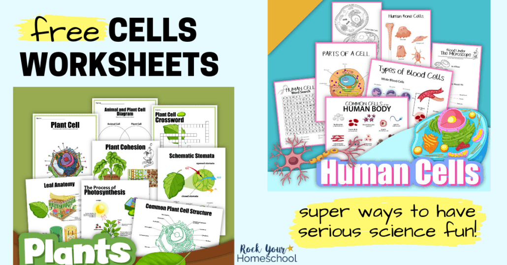 These 15 free cells worksheets (human and plant) are easy ways to boost science fun.
