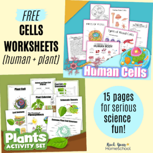 Enjoy serious science fun with these 15 free cells worksheets (human and plants).