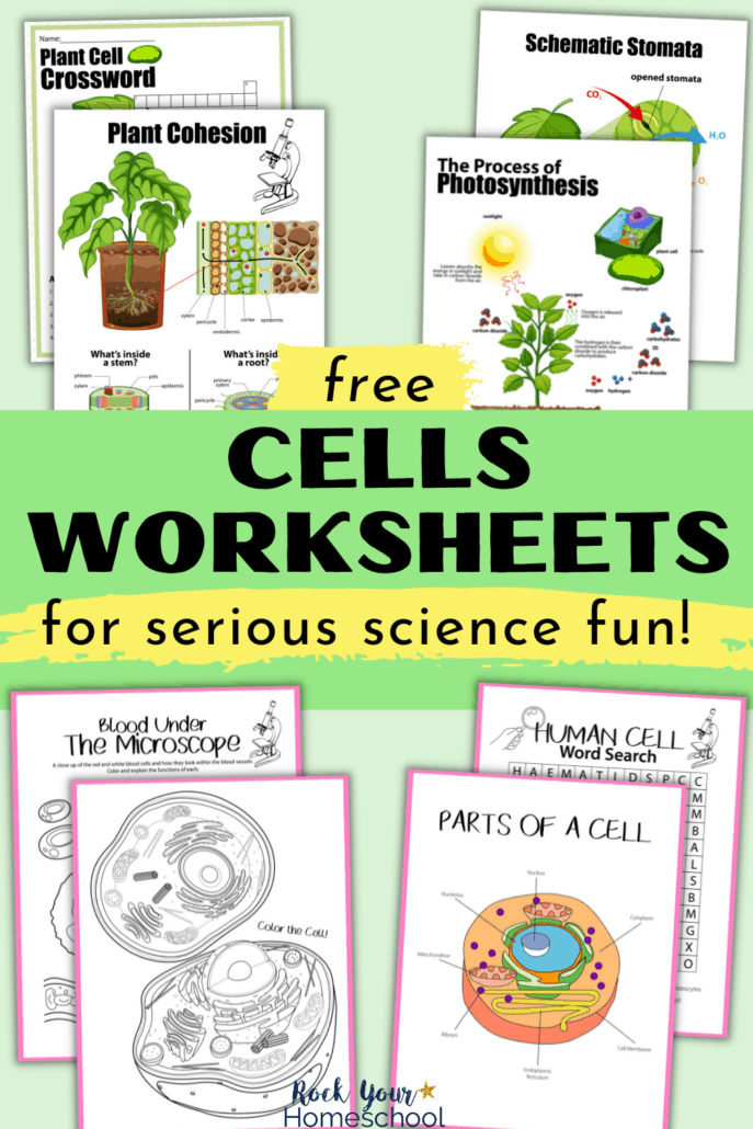 Free Cells Worksheets for Super Fun Science Activities for Kids